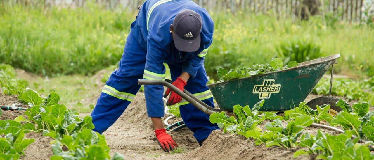 Temporary Worker – Seasonal Worker Visa (Tier 5)